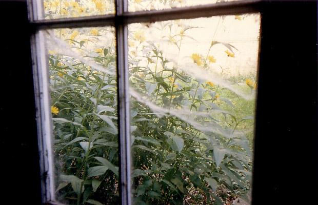 Une vue imprenable sur une végétation luxuriante...